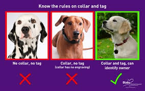 Two fined for collar and tag offences